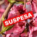 SUSPESA - Fira Baronia d'Aitona, terra de flors i fruita dolça