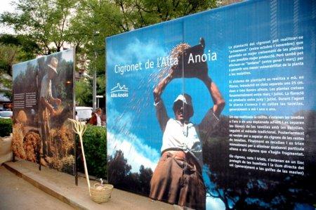 Exposició del cigronet de l'Alta Anoia