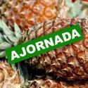 AJORNADA - Fira dels Indians de Cadaqués