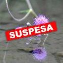 SUSPESA - Fira del Medi Ambient a TORRELLES DE LLOBREGAT