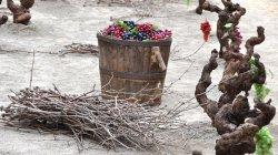Festa del Most, mostra de les tradicions i dels oficis del camp català a Castellví de la Marca