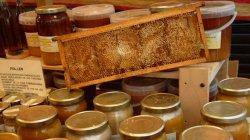 La mel i les abelles a l'Aplec de les Bresques d'Orpí