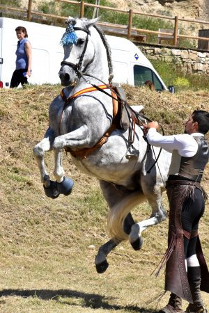 Festa del Panellet a Castellgalí