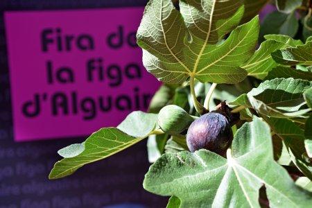 Fira de la Figa d'Alguaire