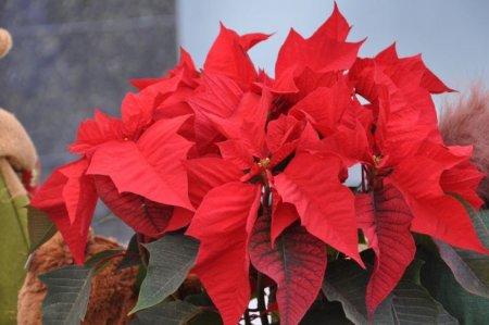 Fira de Nadal de Cabrils